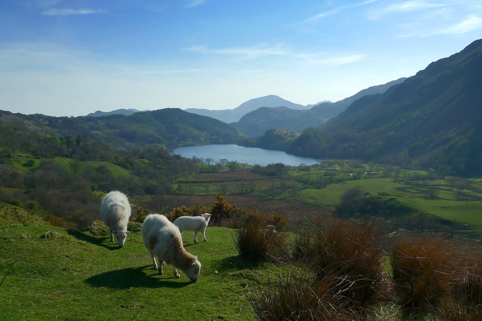 Snowdonia-National-Park-Animal-Photo
